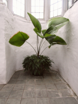 Plant with architecture