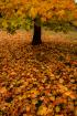 Autumn, 2020