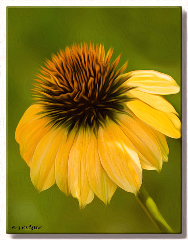 Yellow Cone Flower Oil Painting