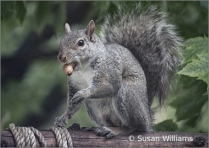 Squirrel with Prize Peanut