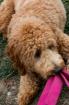 Riley 2