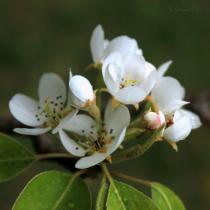 Recalling Spring