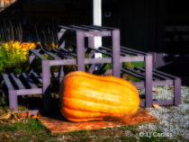 one big pumpkin!