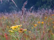 Wildflowers Weeds And Wet Webs OnThe Prairie