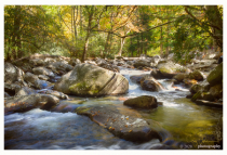 Smokey Mountain Stream #3