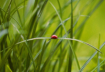 World of ladybug