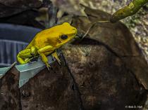 Little Yellow Fellow