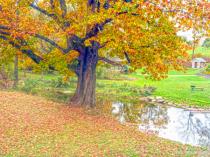 October Splendor