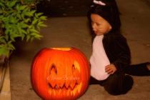 Kitten and the Pumpkin