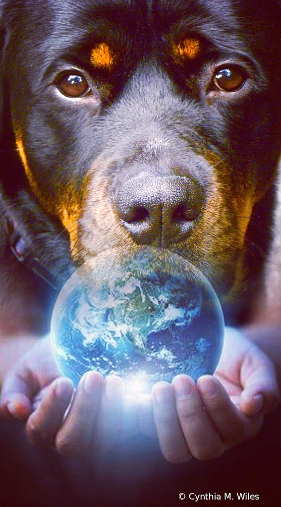 Dogs Make the World Go 'Round