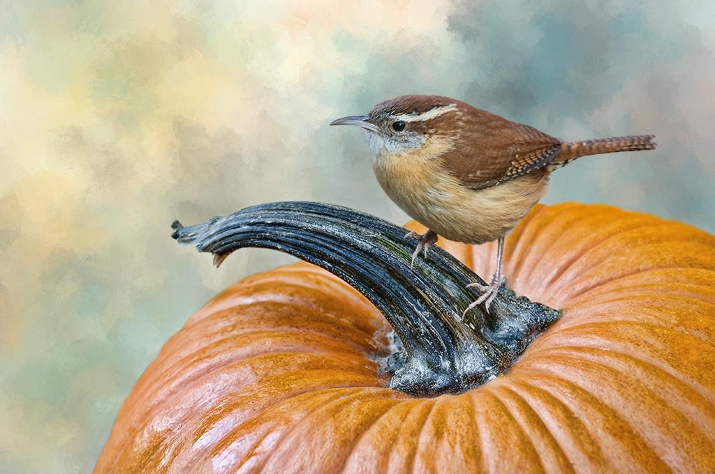 Pumpkin Break