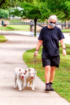 Masked Man Walks Dogs