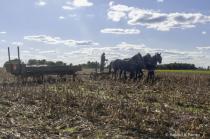 Amish Wagon in Field . . .