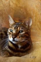 Cat is G. G. Leger