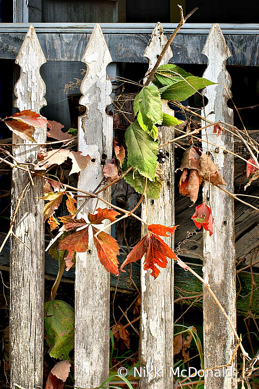 Old Fence in Autumn