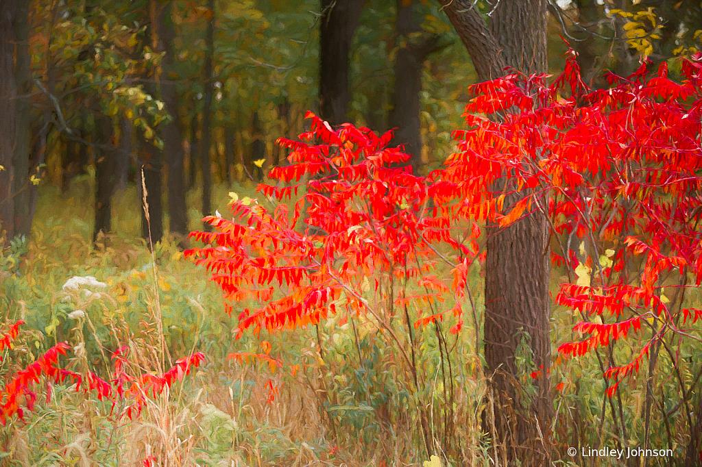 Vivid Red Autumn