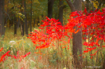 Vivid Red Autumn