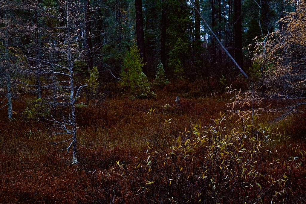 Tahquamenon Forest
