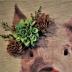 © Theresa Marie Jones PhotoID # 15864972: Pretty Piggy