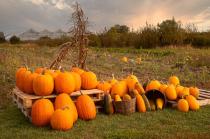Pumpkins at Lilycrest Gardens
