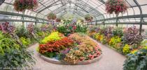 Niagara Falls Conservatory Showcase