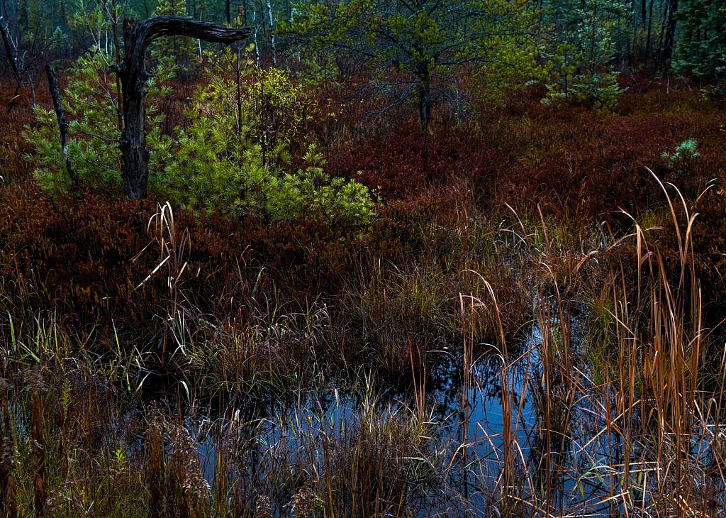 Tahquamenon Forest #2