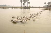 Nature photo Naypyidaw  ,myanmar