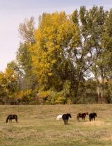 autumn horse pasture