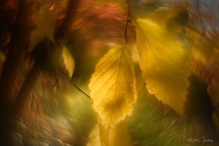 Autumn Leaves and Warm Light