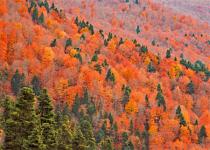 Fall colored mountainside.