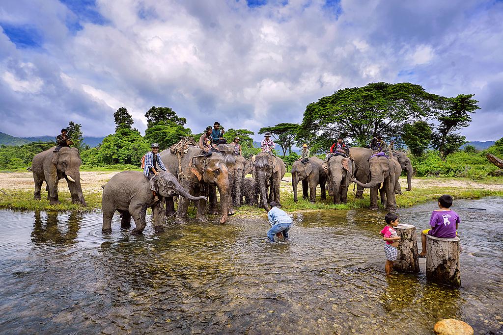 Elephants drink water