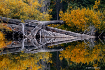 Fall reflection on mountain pond