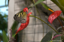Butterfly House at Hershey . . .