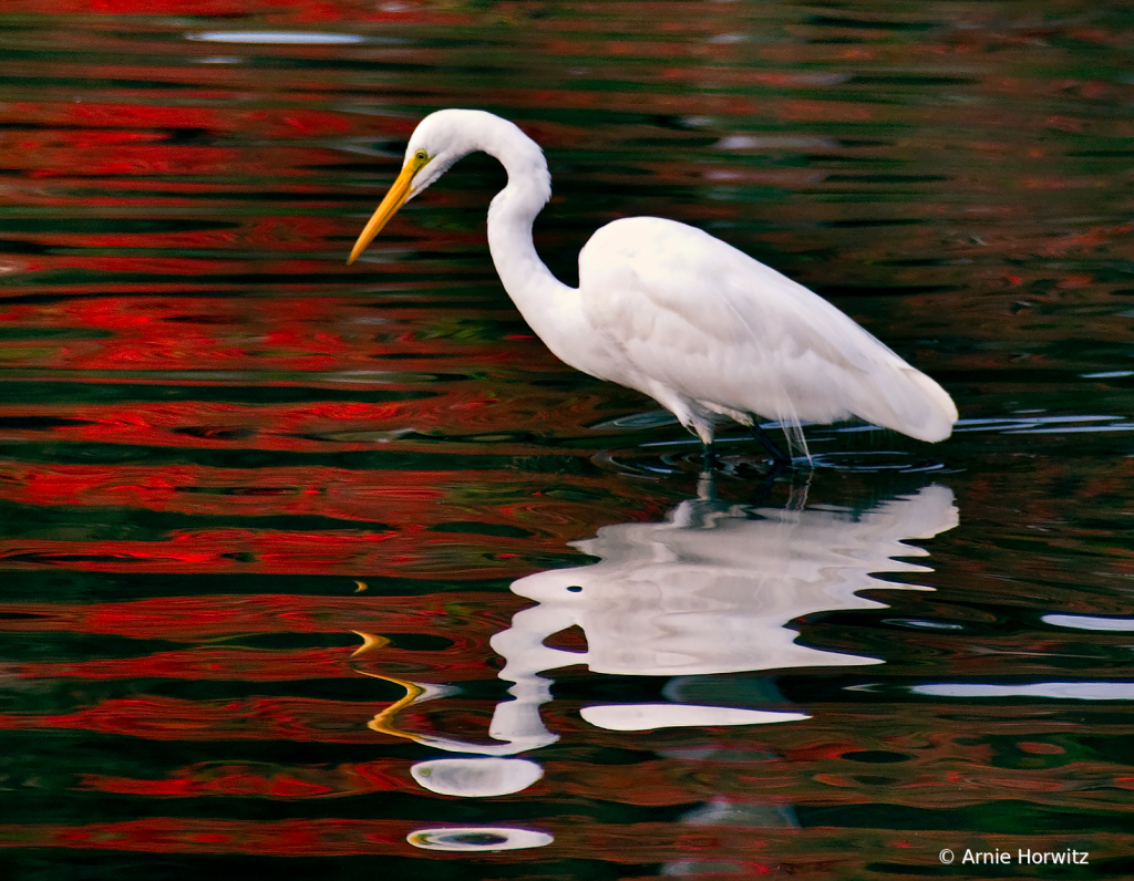 Egret and its Reflection