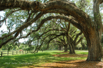 Charleston shade