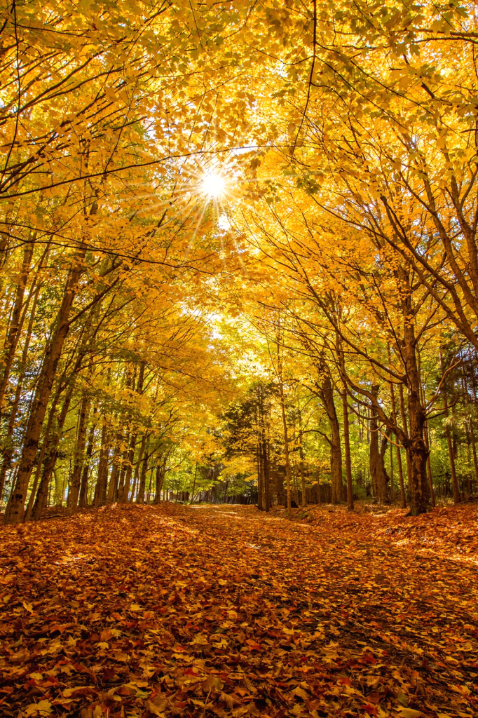 Under a Canopy of Gold