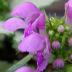 © Angela Atanasio-Medeiros PhotoID# 15866047: New Growth Orchids
