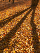 Autumn Shadows