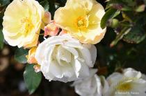 Yellow & White in Lancaster Pa...