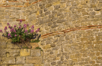 Plant on a Wall