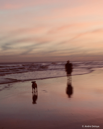 Walking the dog in my dream