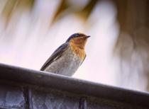 On top of the bird hide