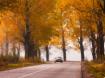 Autumn on the roa...