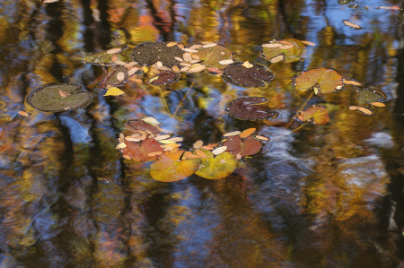 The ochre and tan pond