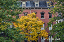 Boston Brownstone in Autumn