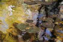 Yellow, Green and Brown colored pond