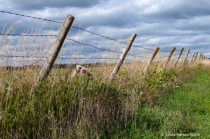 Fencing in or out?