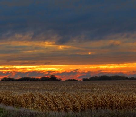 Sunrise Over Autumn Corn