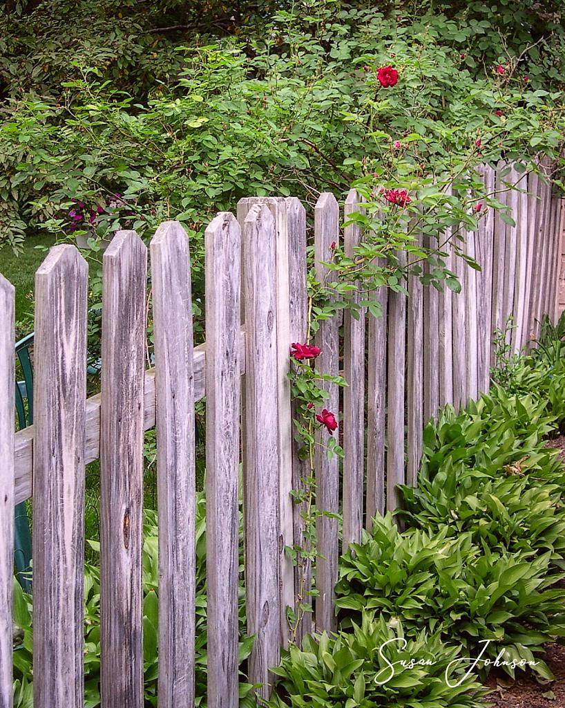 Backyard Boundary - ID: 15870792 © Susan Johnson