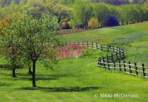 Mahoney Landscape